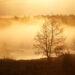 Pilica wschód słońca